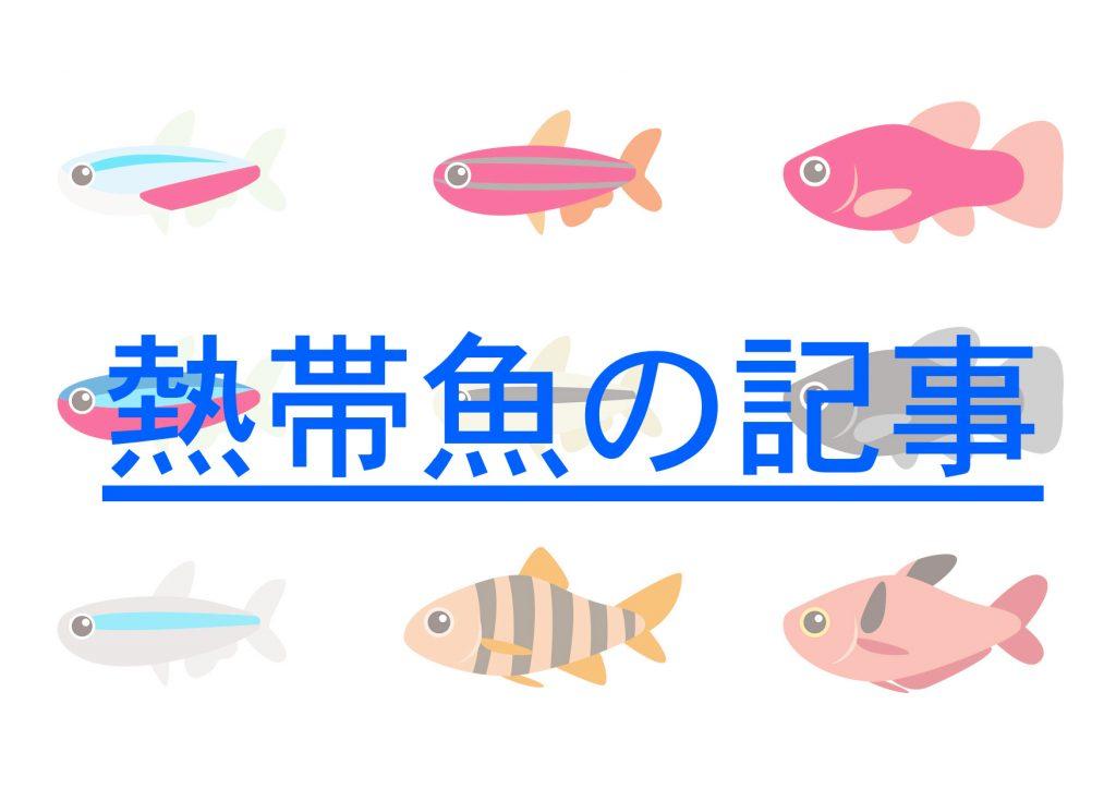 熱帯魚一覧
