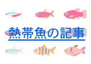 熱帯魚 記事