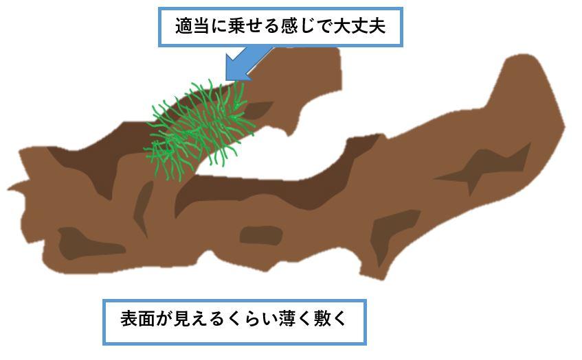 南米ウィローモス-植え方-流木に敷く