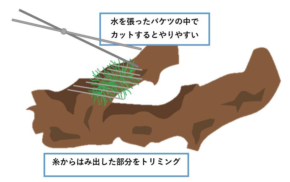 南米ウィローモス-植え方-軽くトリミング