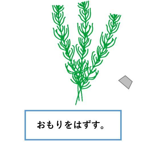 マツモ-植え方2