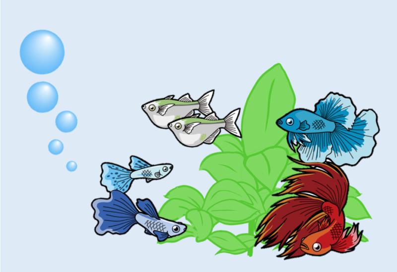 小さい水槽で飼える魚ベスト5