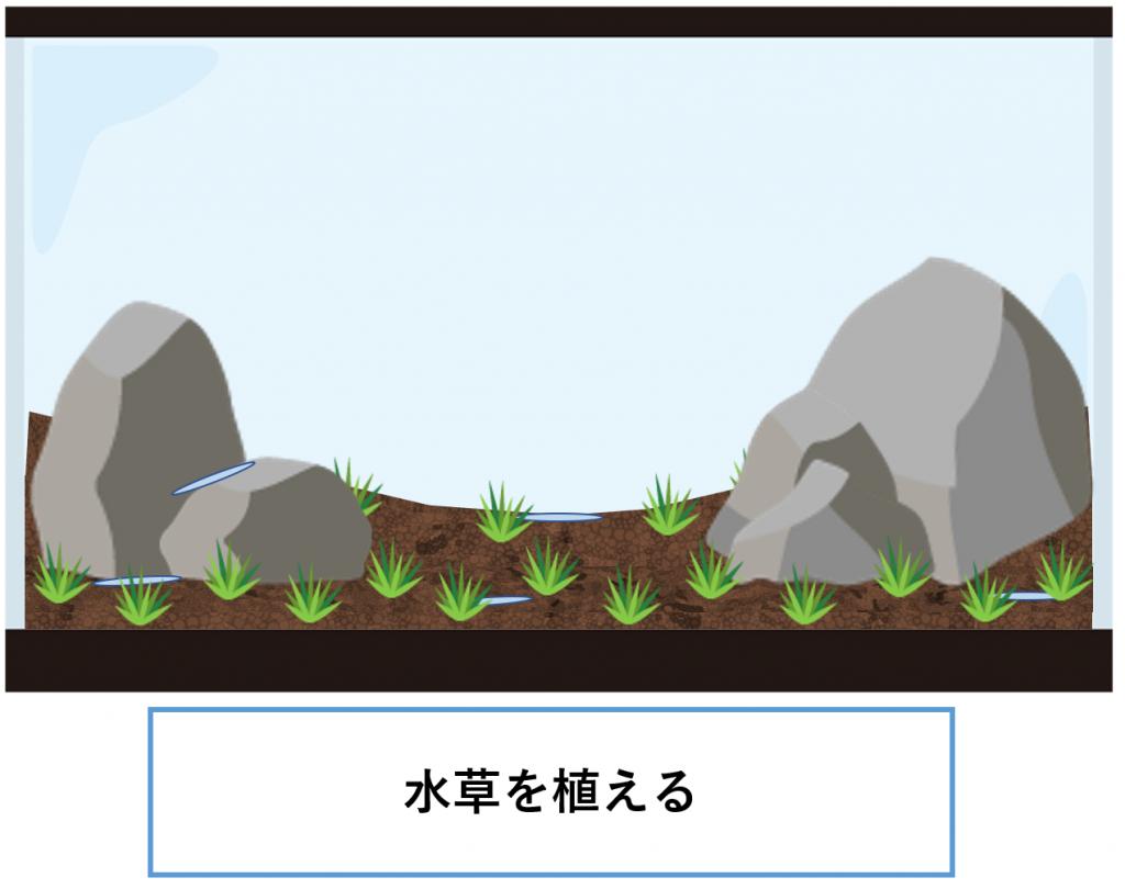 植栽-水草を植える