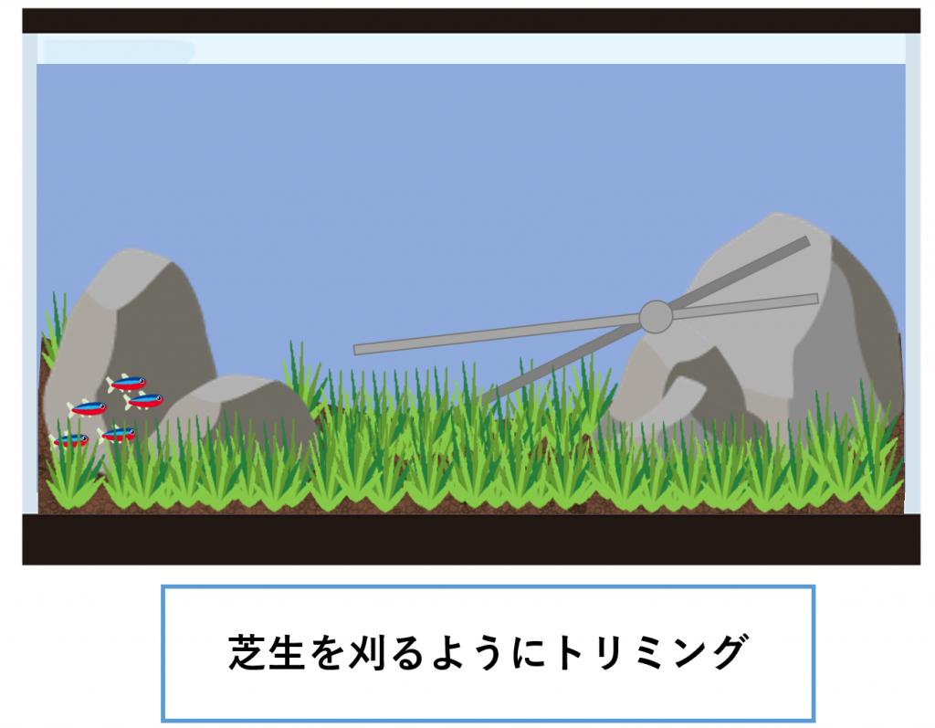 水草の絨毯-トリミング