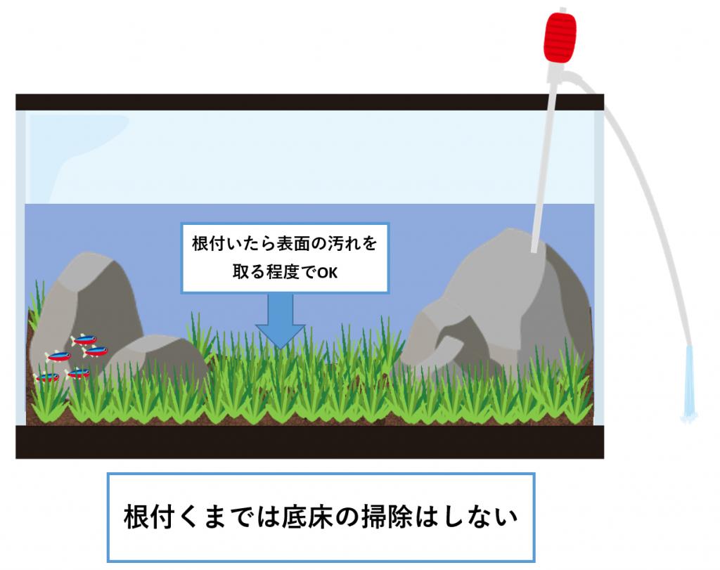 水草の絨毯-メンテナンス