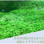 水草の絨毯-アイキャッチ