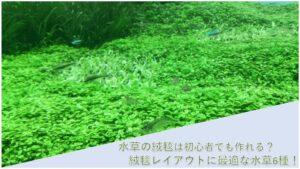 水草の絨毯