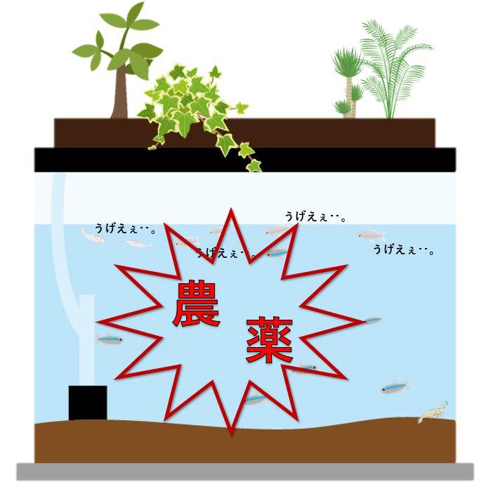 ハイドロカルチャー 水槽 農薬