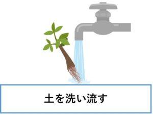 観葉植物 上部フィルター 土を洗い流す