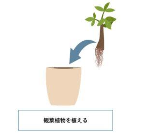 アクアポニックスモドキ 観葉植物を植える