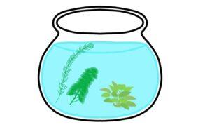 ボトリウム-水草